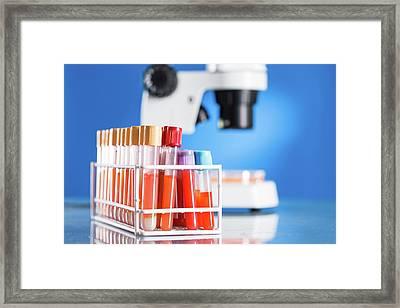 Blood Samples In Lab Framed Print by Wladimir Bulgar