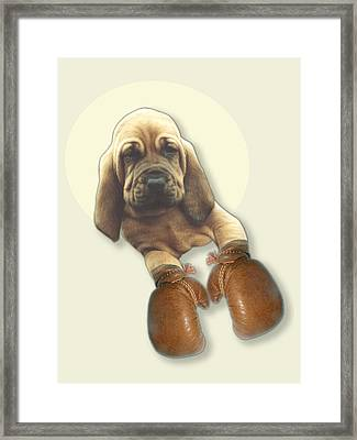 Bloodhound Boxer Framed Print by Jimmy Collins