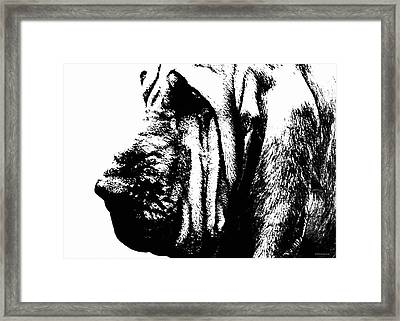 Bloodhound - It's Black And White - By Sharon Cummings Framed Print by Sharon Cummings