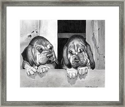 Bloodhound Puppies Dog Portrait  Framed Print by Olde Time  Mercantile