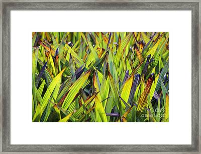 Bloodroot Abstract Framed Print by Neil Overy