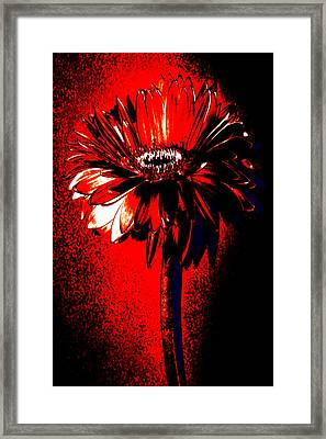 Bloody Mary Zinnia Framed Print by Sherry Allen