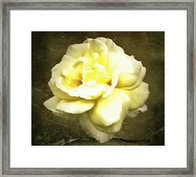 Bloom In Full Framed Print by Cathie Tyler