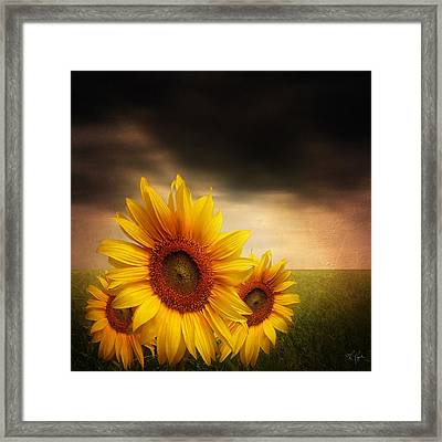 Bloom In Gloom- Sunflower Art Framed Print by Lourry Legarde
