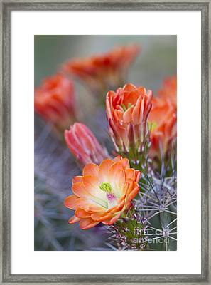 Framed Print featuring the photograph Bloom In Orange by Bryan Keil