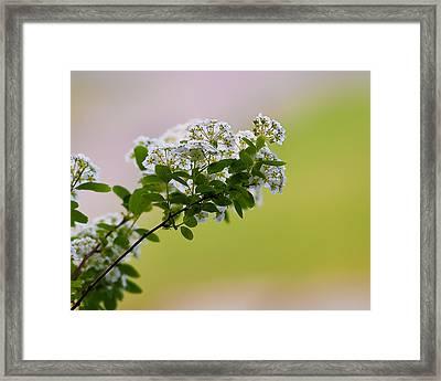 Bloom Framed Print by Joe Scott