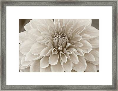 Framed Print featuring the photograph Bloom by Matthew Ahola