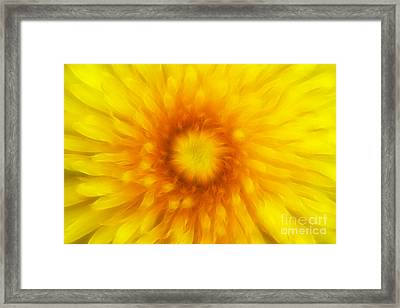 Bloom Of Dandelion Framed Print by Michal Boubin