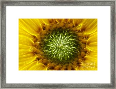 Bloom Of The Sunflower Framed Print