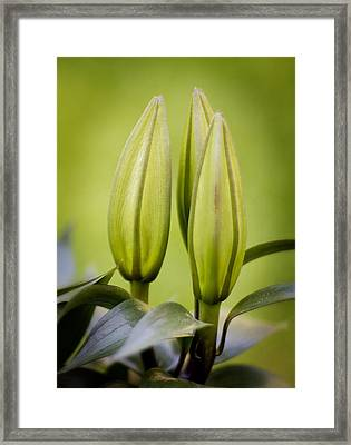 Bloom Patience Framed Print