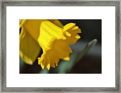 Bloom Framed Print by Thomas  MacPherson Jr
