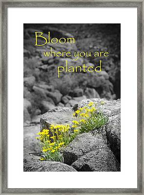 Bloom Where You Are Planted Framed Print by Debbie Karnes