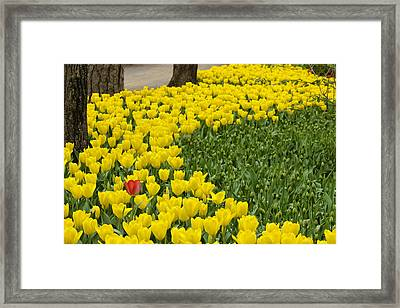 Framed Print featuring the photograph Bloom Where You Are  Planted by Robert Camp