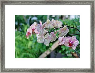 Bloomin' Framed Print