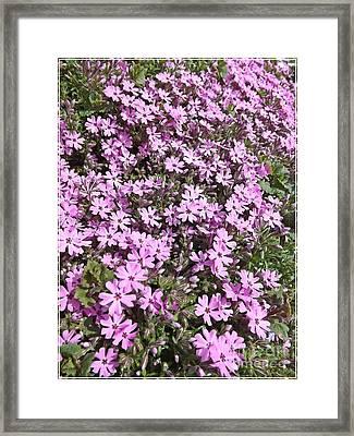 Bloomin Like Mad Framed Print by Sara  Raber