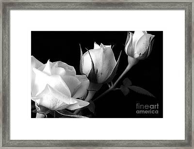 Bloomin' Roses Framed Print