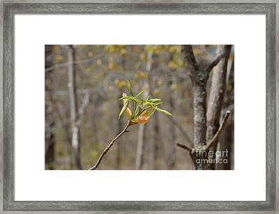 Blooming Framed Print by Alys Caviness-Gober