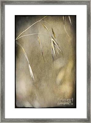 Framed Print featuring the photograph Blooming And Seeding by Chris Armytage