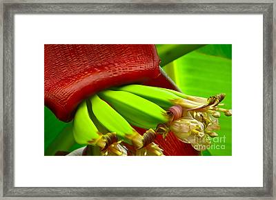 Blooming Bananas Framed Print by Joy Hardee