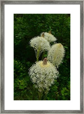 Blooming Bear Grass Framed Print