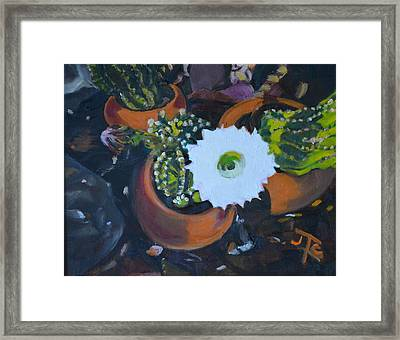 Blooming Cacti Framed Print