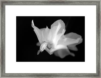 Blooming Cactus II Framed Print