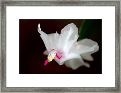 Blooming Cactus Framed Print by Silke Brubaker