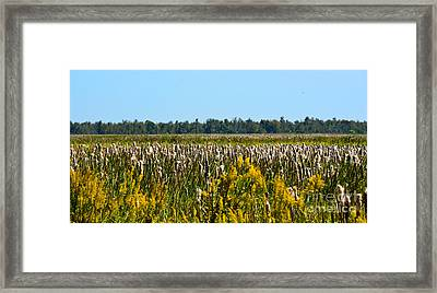 Blooming Cattails As Far As The Eye Can See Framed Print