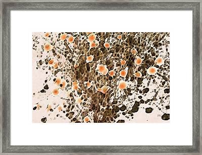 Blooming Desert No 1 Framed Print