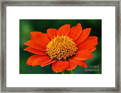 Blooming Flower Framed Print