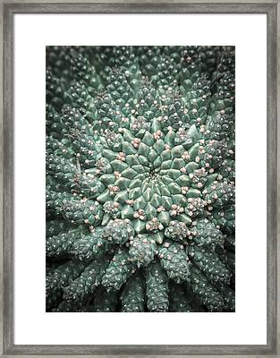 Blooming Geometry Framed Print