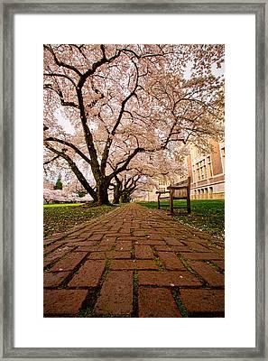 Blooming Giants Framed Print