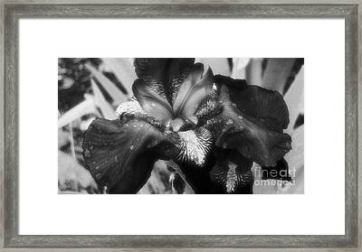 Blooming In Black And White Framed Print by Mkaz Photography