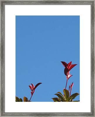 Blooming Leaves Framed Print