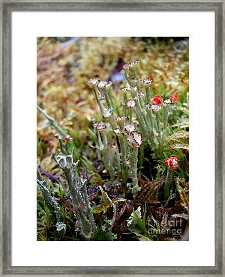 Blooming Lichen Framed Print by Steven Valkenberg