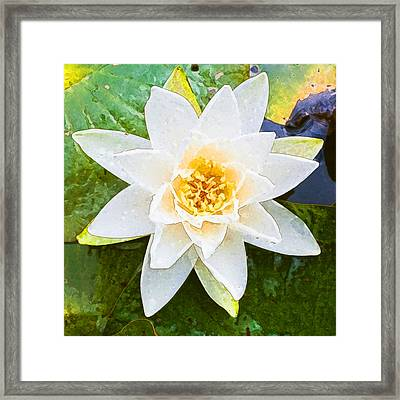 Blooming Lily Framed Print