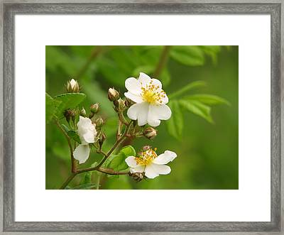 Blooming Framed Print by Lynn Berney