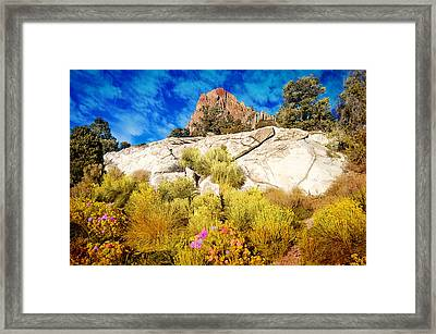 Blooming Nevada Desert Near Ely Framed Print by Gunter Nezhoda