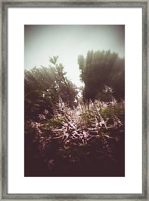 Blooming Rays  Framed Print