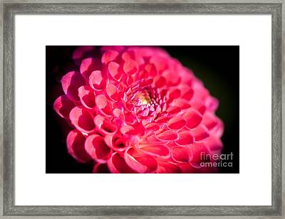 Blooming Red Flower Framed Print by John Wadleigh