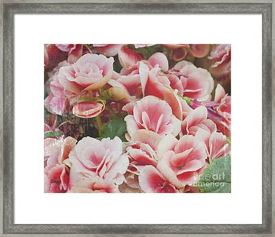 Blooming Roses Framed Print