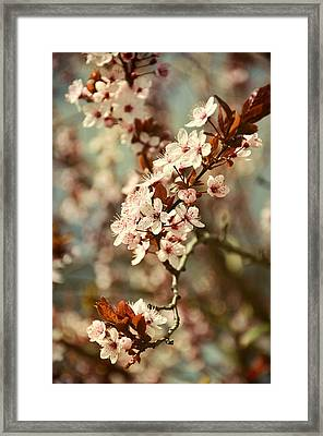 Blooming Spring Framed Print by Gynt Art