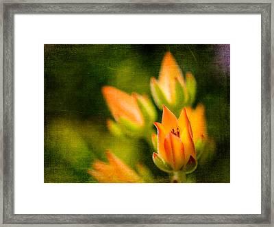 Blooming Succulents IIi Framed Print