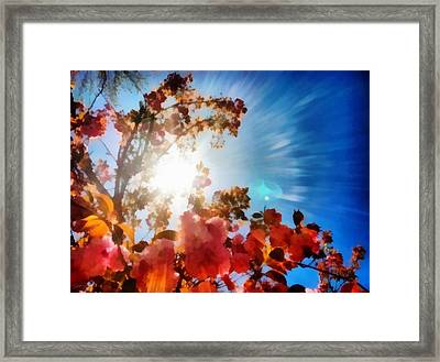 Blooming Sunlight Framed Print