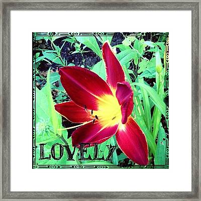 #blooming This Morning. A #lovely #lily Framed Print