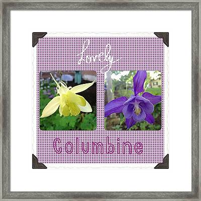Blooming Today. #lovely #columbine Framed Print