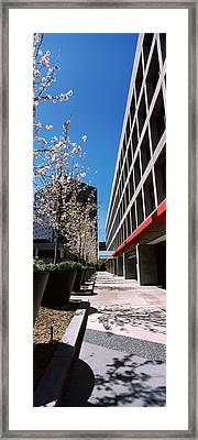 Blooming Tree In The Business District Framed Print by Panoramic Images