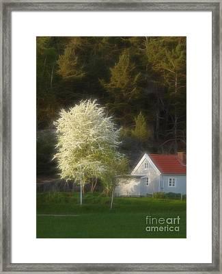 Blooming Tree Framed Print by Lutz Baar