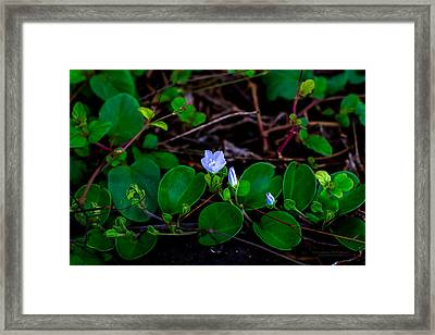 Blooming Vine Framed Print