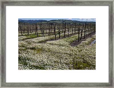 Blooming Vineyards Framed Print by Garry Gay